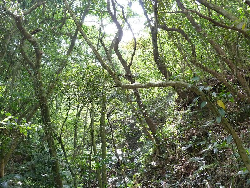 TAIWAN Ile de Lanyu - P1010377.JPG