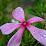 MRITUNJOY Chhetri's profile photo