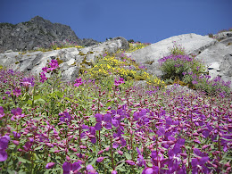 Lots o' wildflowers.