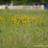 2013 Spring Flora & Fauna - IMGP6498.JPG
