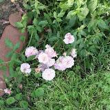 Gardening 2012 - IMG_2876.JPG