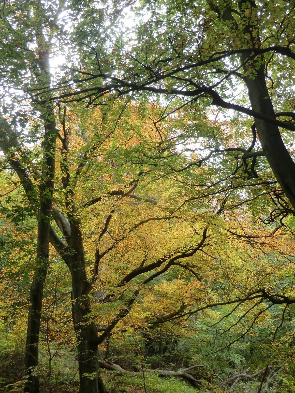 CIMG0898 Marden Park Woods in autumn
