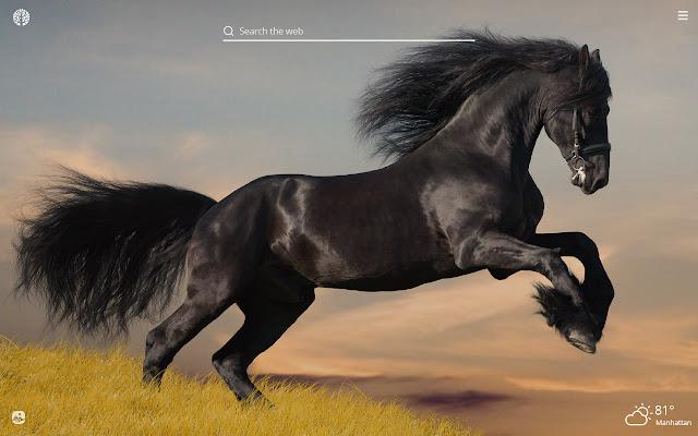 Black Horses HD Wallpapers New Tab Theme