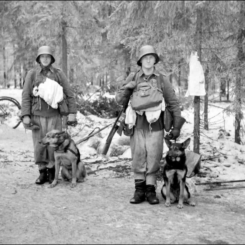 A Guerra de Inverno - Finlândia versus URSS