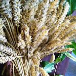 Harvest morning 2015 - 10