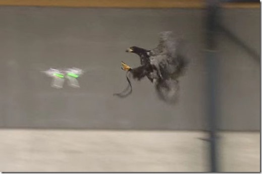 Dutch-police-have-trained-a-hawk-to-attack-drones