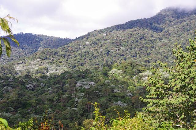 La forêt des nuages. Los Cedros, 1400 m. Montagnes de Toisan, Cordillère de La Plata (Imbabura, Équateur), 21 novembre 2013. Photo : J.-M. Gayman
