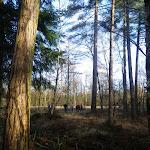 017-Nieuwjaarswandeling met de Bevers.Menno gidst ons door het mooie natuurgebied De Regte Heide te Go+»rle