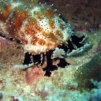 Zeekomkommer