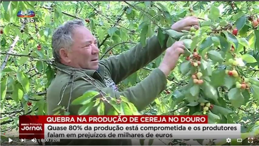 Reportagem SIC - Quebra de 80% na produção de cereja no Douro