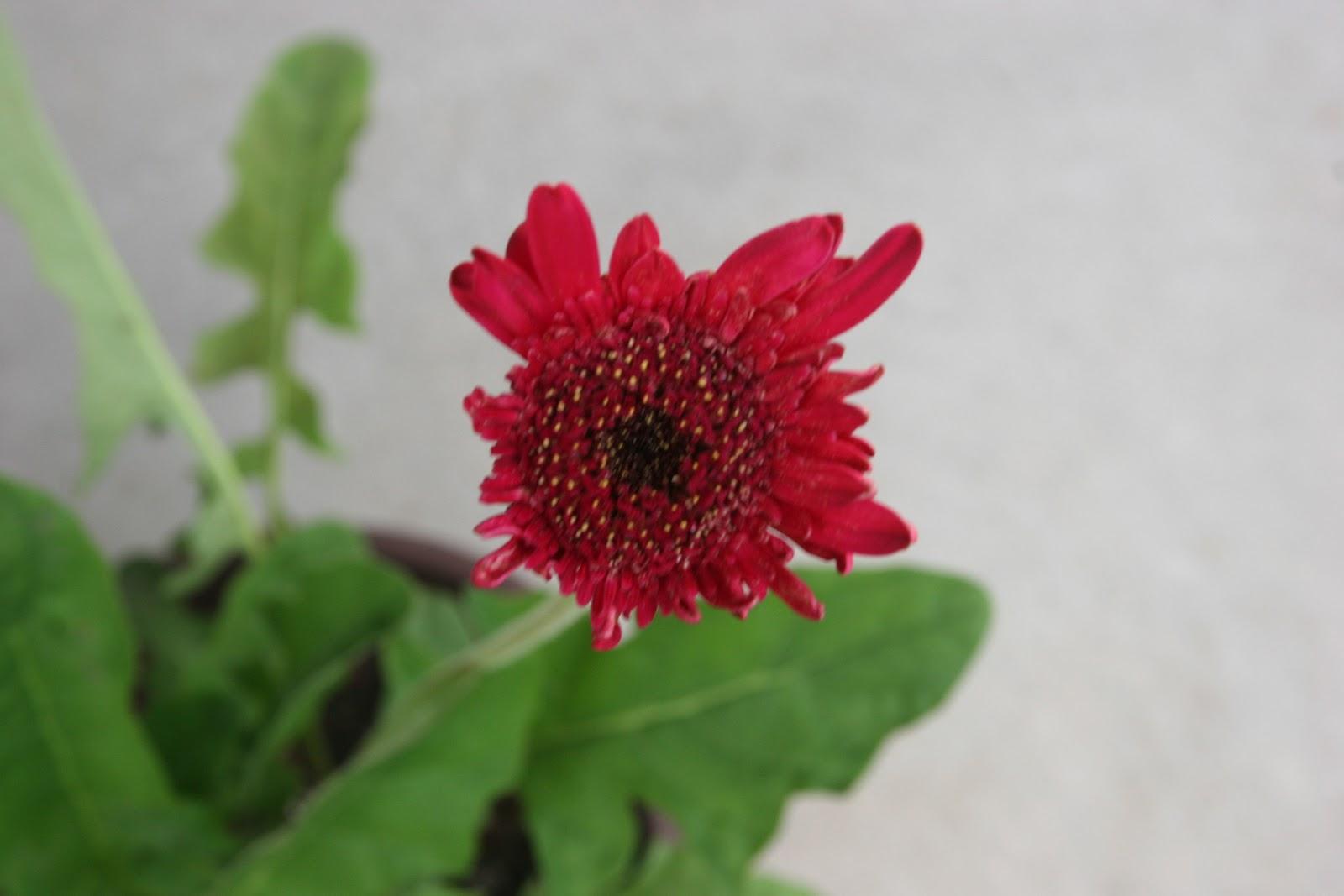 Gardening 2012 - IMG_3322.JPG