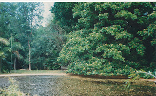 5200Darwin Botanic Gardens