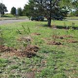 Hammo Planting - Shannon Schiesser - IMG_4952.JPG
