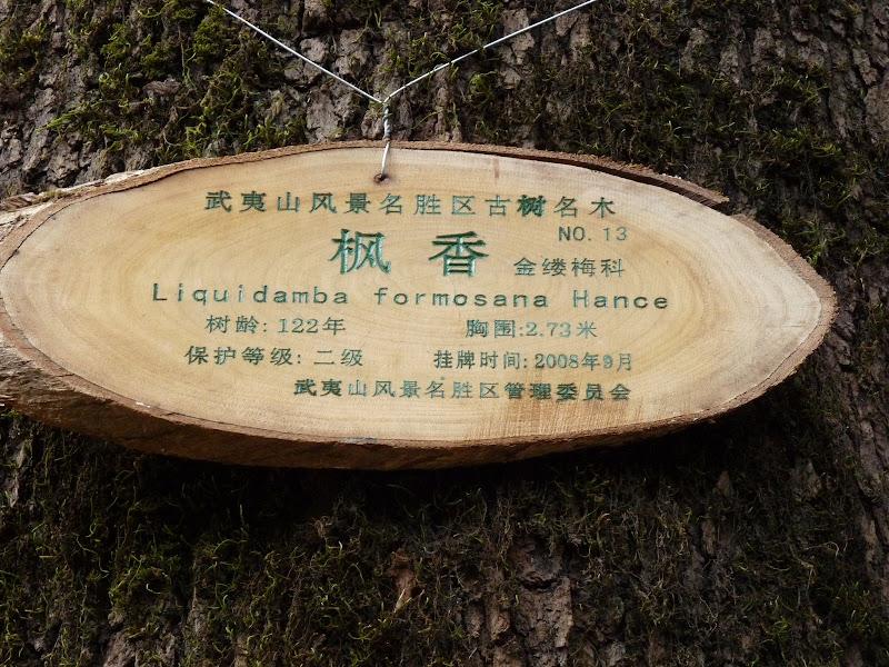 Chine .Fujian.Wuhi shan B - P1030435.JPG