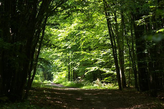 Dans la forêt, Hautes-Lisières (Rouvres, 28), 5 juin 2010. Photo : J.-M. Gayman