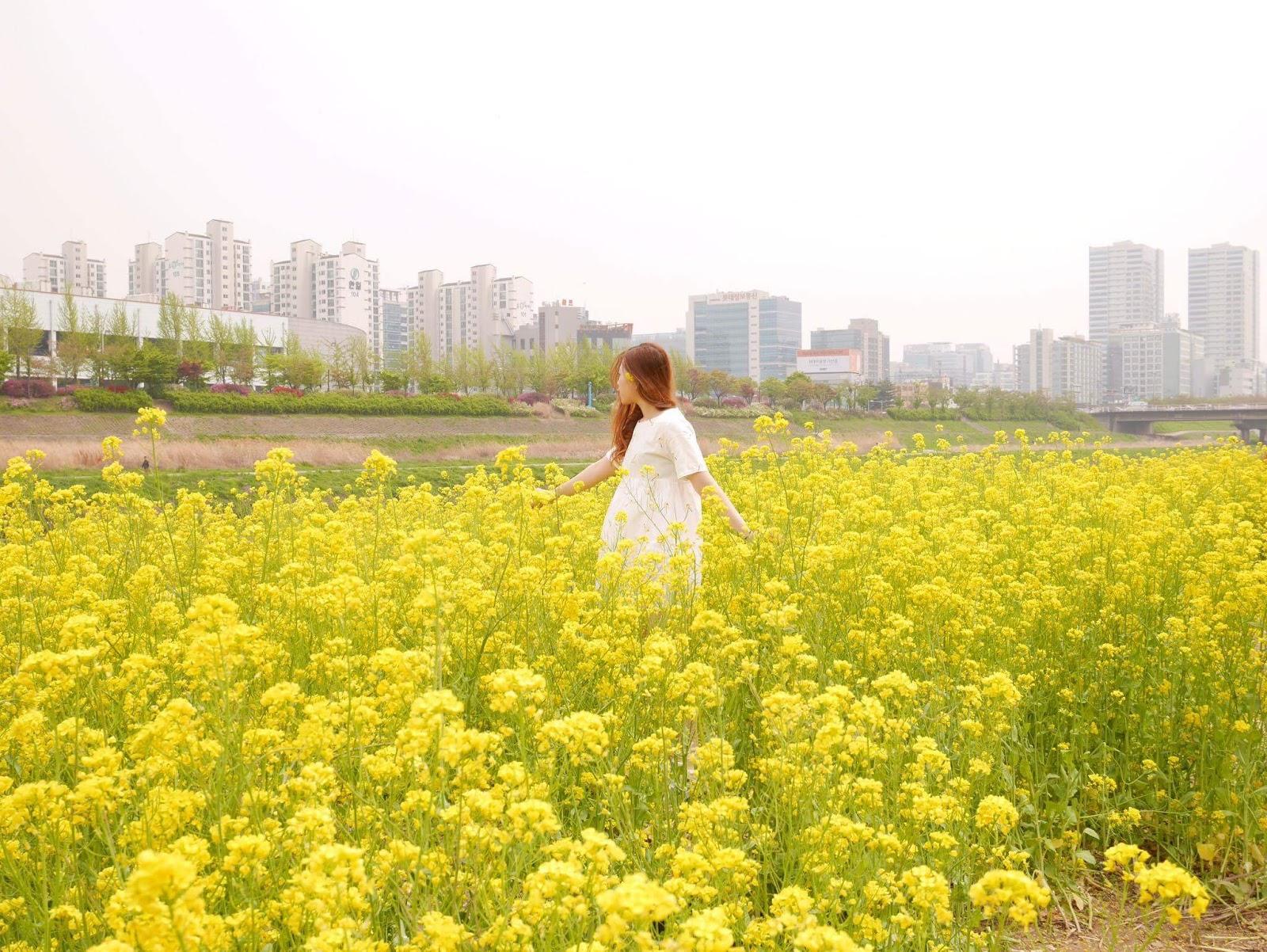 Eatavelpeat Korea Canola Field Guro