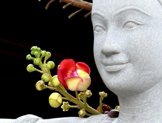 Những đức hạnh lý tưởng của đức Phật