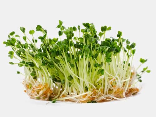 Rau mầm cải Đà Lạt