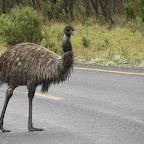 500 km von Thredbo nach Merimbula - Emu