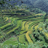 9. Rice paddocks of Longsheng