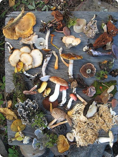 Biodiversity-Fungi_of_Saskatchewan