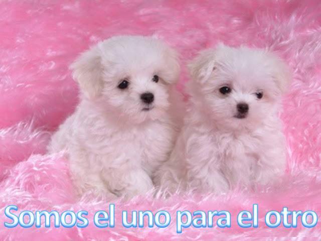 Cachorritos tiernos