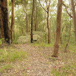 Green track near the Mt Sugarloaf summit (324653)