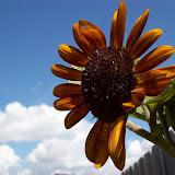 Gardening 2009 - 101_5182.JPG