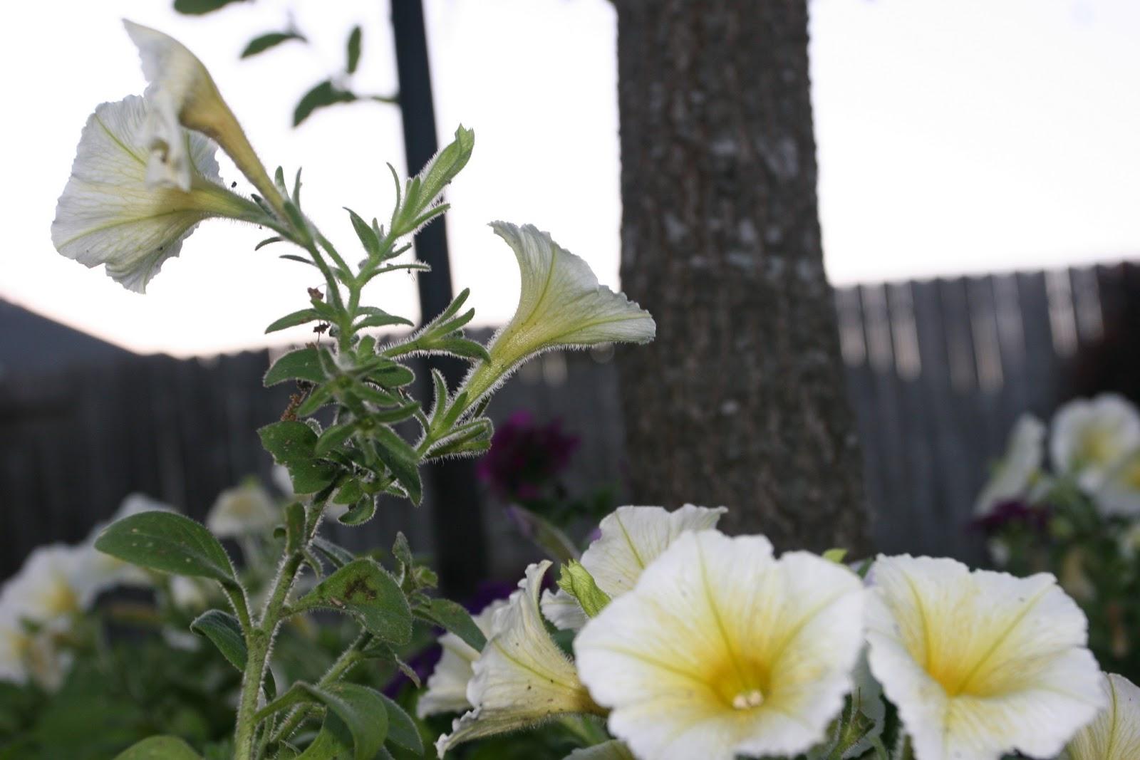 Gardening 2012 - IMG_2749.JPG
