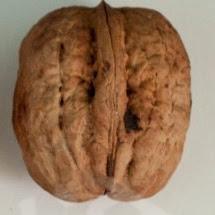 Силезия грецкий орех