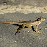 galapagos - Galapagos_FB_2-165.jpg