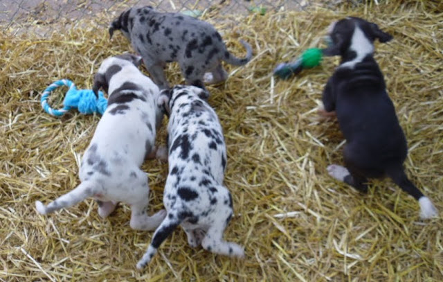 Thelma & Garths 3/21/12 litter - SAM_3299.JPG