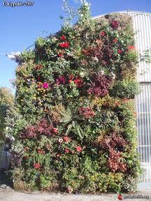 foire exposition salon derbez murs vegetaux