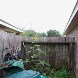 Gardening 2015 - 116_9256.JPG