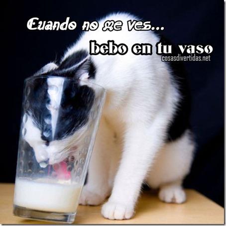 gato bebe en tu vaso