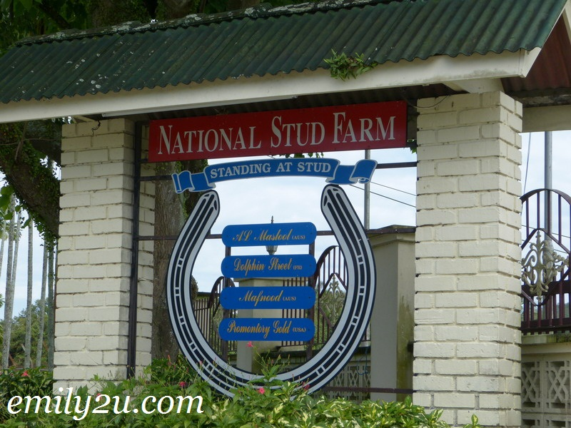 NSF National Stud Farm