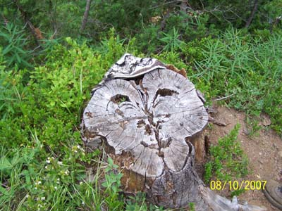 Just a stump with a hat? or the ruler of Devil's Dome?
