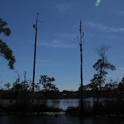 Fowl Marsh from Boat Feb3 2013 132