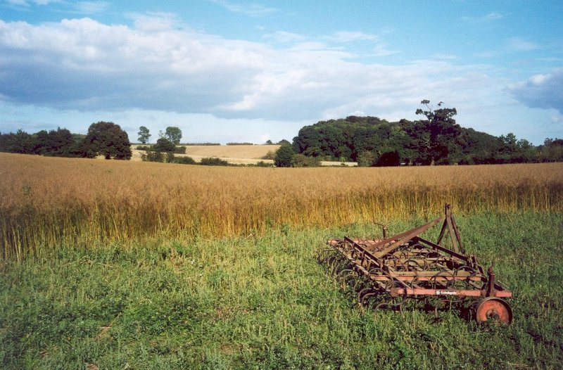 suffolk field