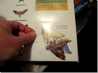 Wings: A Pop-Up Book of things that fly  butterfly 3