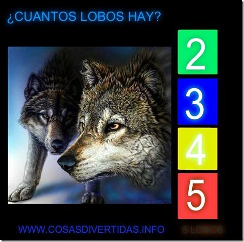 111 lobos