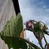 Gardening 2010, Part Two - 101_2258.JPG