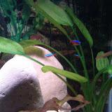 Fish - IMG_20121230_163348.jpg