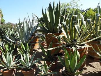 2018.08.21-026 cactus