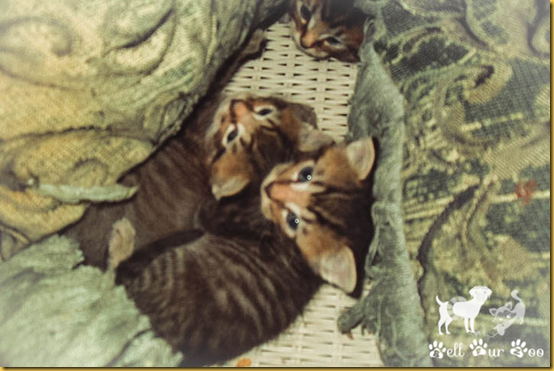 Matilda, Mom & Siblings - 3 (TT) (1 of 1) watermarked