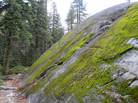 And this wall of moss  ©http://backpackthesierra.com