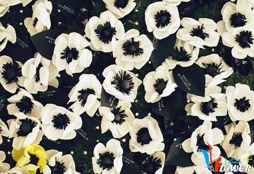 làm hoa anh túc bằng giấy nhún