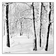 1968-1969 Зима в Лесопарке
