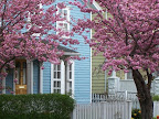 Hubbell Park blue house and flowering trees