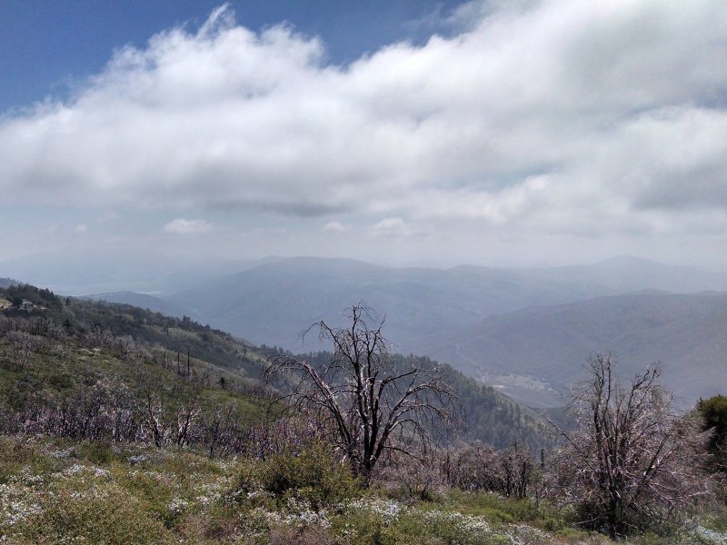 Palomar Mountain • View from East Grade Road